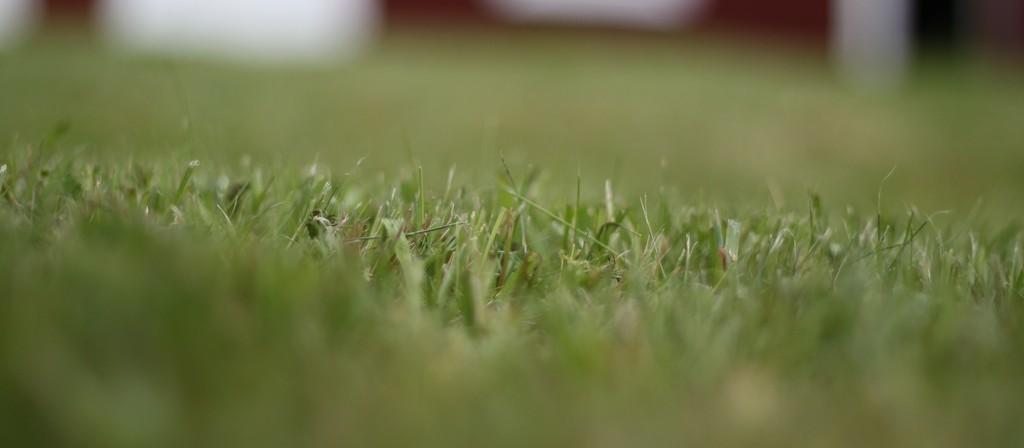 Grass Meadow